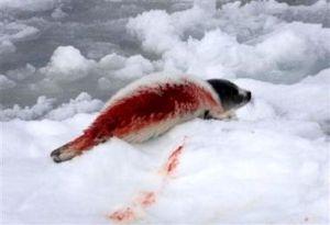 matanza-de-focas-02